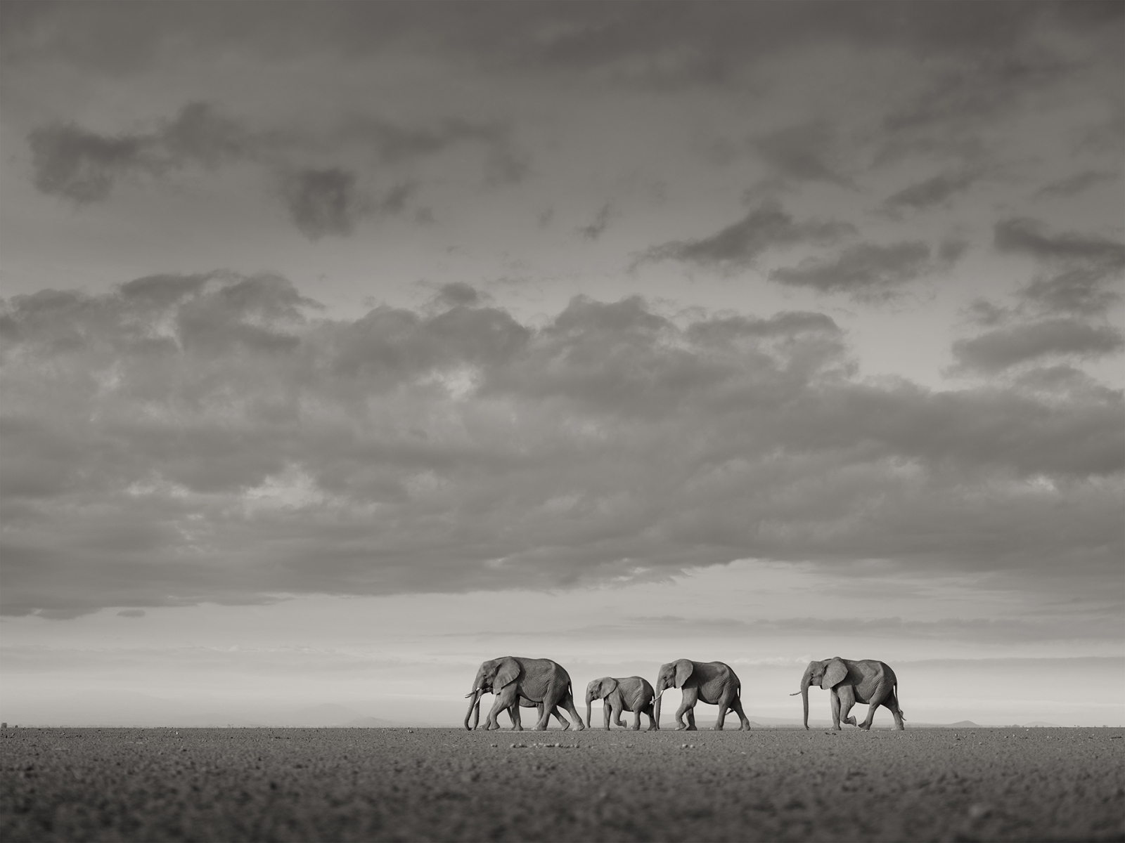 Elephants-crossing_2017_1900